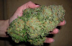 Weed dispensary